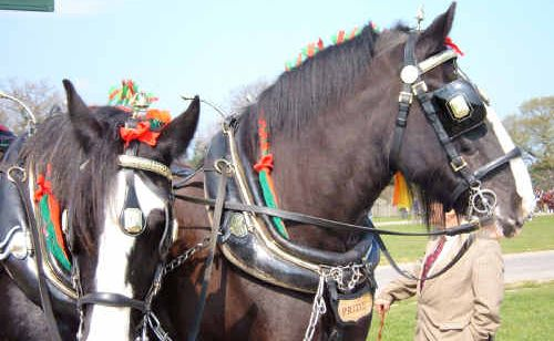 The Heavy Horse and Harness Day on Saturday celebrates these hard-working animals.