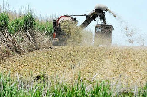 A harvester is put to work on a Bundaberg cane farm.