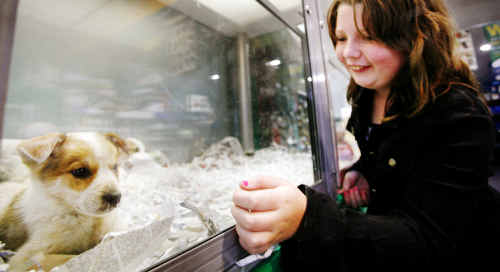 Taliah Walker, 10, of Rosewood would loves to look at the puppies on display at Pets Paradise in Riverlink.
