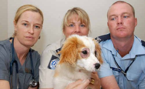Better Vets' Holly Goldring, left, RSPCA Mackay regional inspector Selina Neill and Northern Beaches police officer Constable Chris O'Keefe with the dog, which is recovering after its eyes were glued shut.