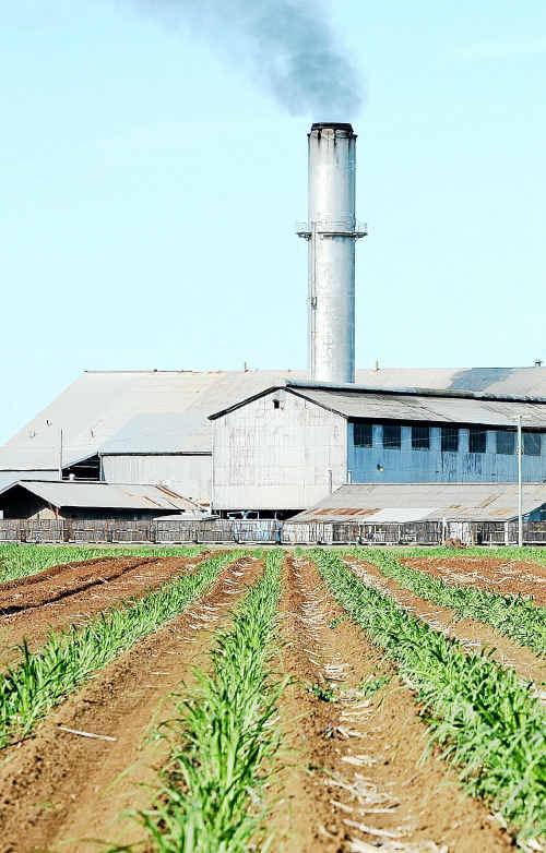 Bingera Mill.