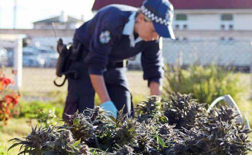 Drugs seized in a Warwick raid in July.