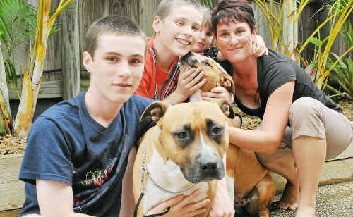 Gladstone American Staffordshire Terrier Breeder Kelly Bannan with her children from left Gerrad 12, Kendall 2, Joseph 9 and two dogs Effie and Trixi.