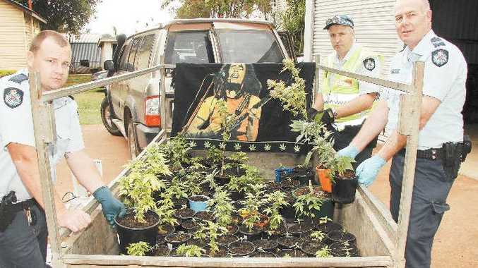 Childers Police Constable Rory Browne with Senior Constables Frank Lawler and Fred Foster and a trailer load of cannabis plants seized in a raid.