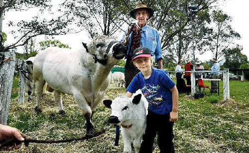 Alex Hughes, 7, of Goolmangar, and Noel Whitney, from Winston Park Stud at Casino, with Noel's Supreme Champion Male Winston Park Snowboy and his newest calf, Flower.