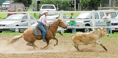 CAMPDRAFT ACTION: Amanda McArthur in action during the Mary Valley Campdraft at the weekend.