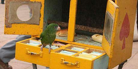 The fortune-telling budgie.