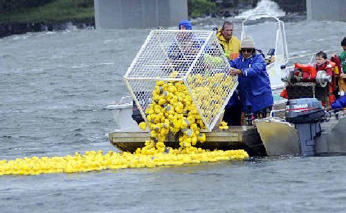 It was ducks away on Sunday at the 18th great duck race held at Missingham Bridge North Creek.