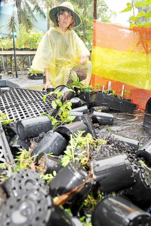 RIGHT: Bundaberg Landcare secretary Maureen Schmitt looks over upturned pots and plants in the nursery area at TAFE.