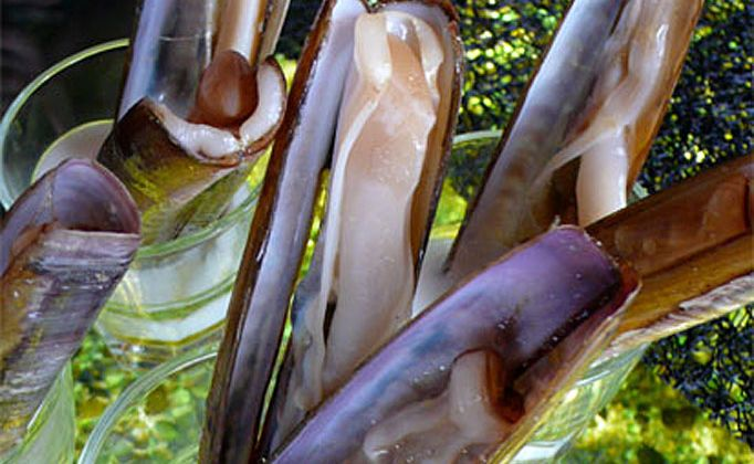 Razor clams are a local specialty in Galicia, Spain.