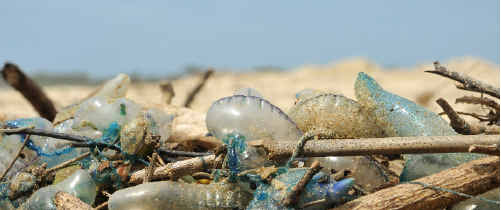 Beachgoers are warned to steer clear of bluebottles on the Coffs Coast.