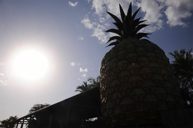 The Big Pineapple on the Sunshine Coast.