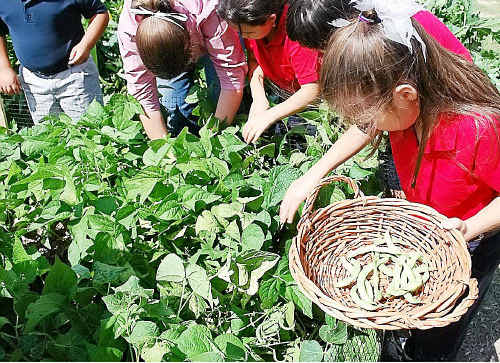 Thanks to a government grant Urunga students will soon be harvesting their own food.