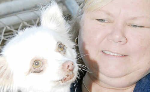 Friends of The RSPCA Gladstone Foster Carer Ingela Warwick with Gypsy who is looking for a new home at the Dog Adoption Day to be held on Sunday.