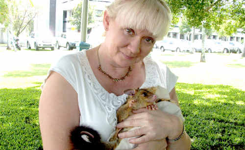 Heli Kivimaa from ANACARA holds a baby possum, which was given to her to care for after it fell from a tree.