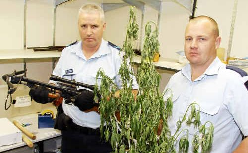Childers police Senior Constable Frank Lawler with a crossbow seized at Woodgate Beach, and Constable Rory Browne with a mature cannabis plant from a plantation seized at North Gregory.