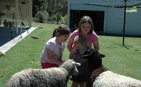 Tylesha, Halye and Shaela Briggs play with their remaining pet sheep.