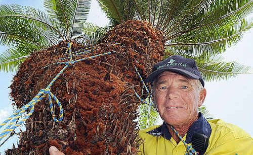 Geoff Bee, supervisor at Reuse and Recycle, with the 50-year-old cycad.