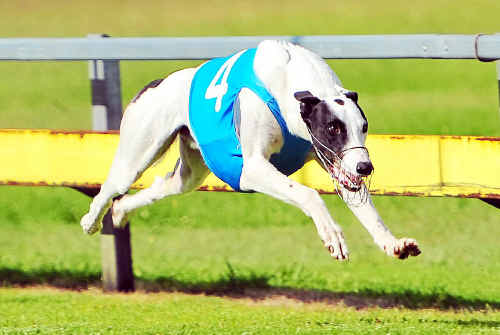 Carlinford Frost dominated a smart field to win the Anniversary Cup final at Thabeban Park.