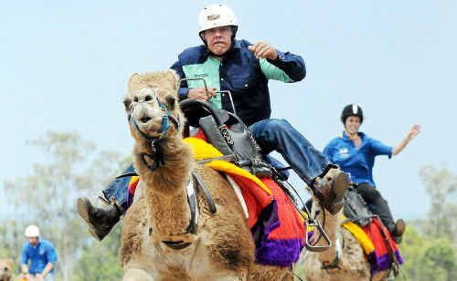 Camels aren't made for speed but the ships of the desert will be hitting the Gympie Showgrounds Racecourse today for Melbourne Cup Day celebrations.