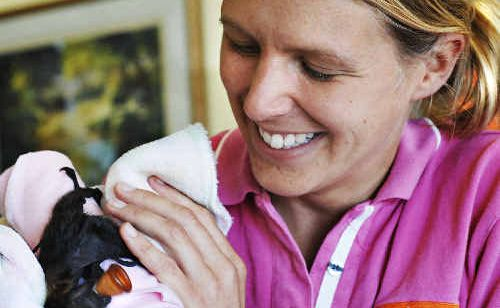 Tiny Jemma, the grey-headed flying fox, is nursed by Lismore veterinarian Jemma Daniels, who performed an emergency Caesarean to deliver the baby fruit bat.