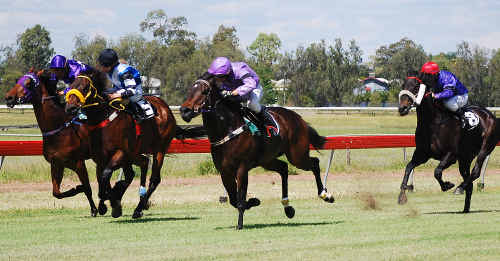 HOME STRONG: Emerald's Stoutfast (centre in purple) was ridden confidently to take out the 1000m Handicap at Pioneer Park at the weekend, putting him even closer to the $3000 Horse of the Year award. nr-061110-284