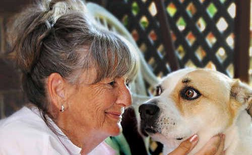 Jill Hanson and her dog Molly survived an horrific car crash on the Bruce Highway in April last year.