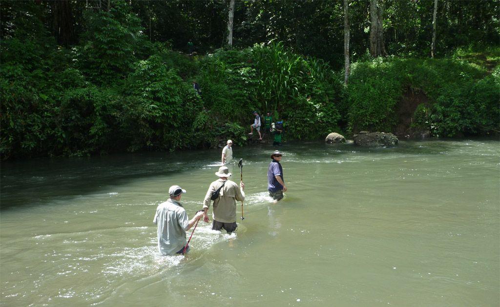 The jungles of Papua New Guinea.