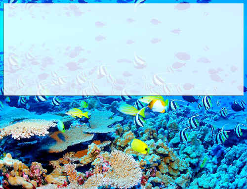 Tropical fish from the waters around the Great Barrier Reef may slowly make their way to North Coast waters as their habitat becomes too warm.