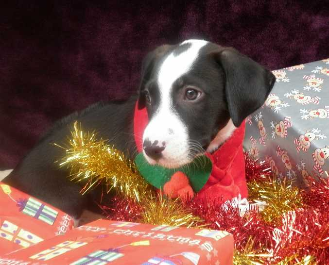 Check out our adoption gallery.  It's our little Christmas present to you.