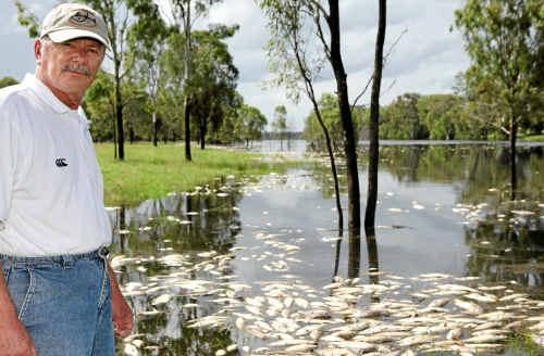 Bill Sawynok inspects the fish kill at Woolwash yesterday.