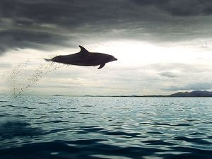Dolphins fly in summer show