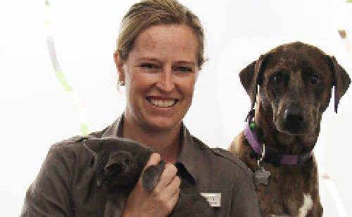 Better Pet Vets veterinarian Holly Goldring, with Ruski and Pera, is calling on dog owners to lock up their pets after two cats have been killed in the last two weeks.