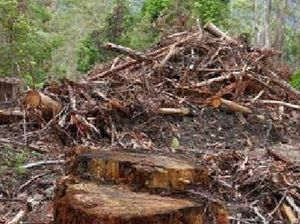 Bill aims to prevent trade of illegally logged timber