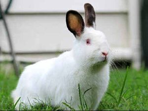 Petition and politicians push campaign for pet rabbits