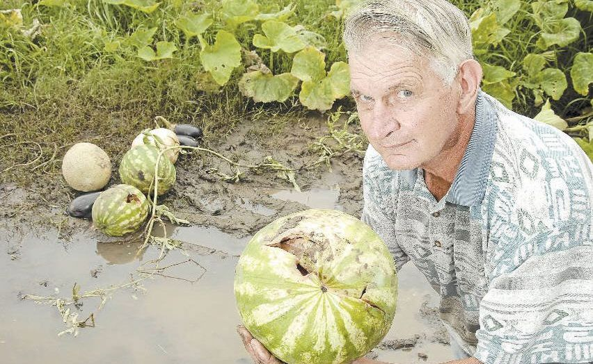 Devestating floods have left Lockyer Valley farmer Wally Reimann with paddocks full of worthless crop.