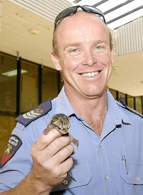 Senior firefighter Matt Kendall helped save newborn kittens at the Heritage Building Society yesterday.