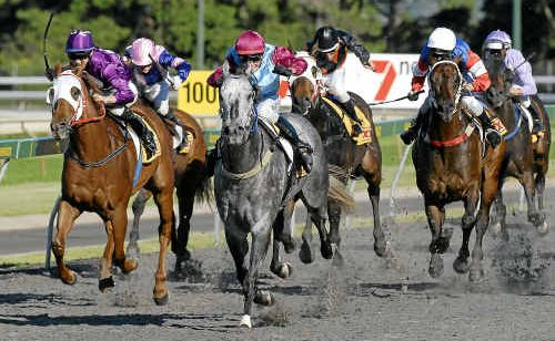 Grey gelding Silver Scholar races to his seventh straight Clifford Park victory in yesterday's XXXX Gold Open Handicap (1200m) for jockey Ron Goltz.