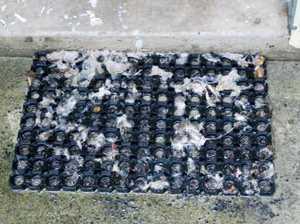 Raw sewage flows into Tweed canal