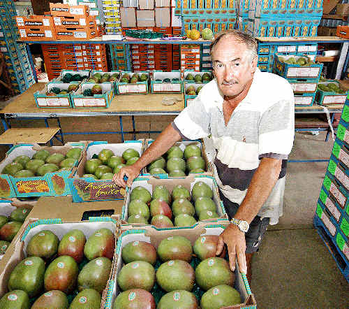 Poor crop: Hogarth Range mango farmer Mike Coleman has had most of his crop wiped out after heavy spring and summer rains.