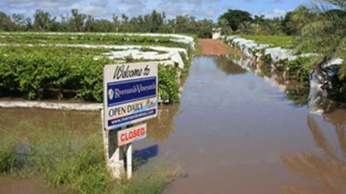 Riversands Vineyards in St George was inundated by floodwaters over the weekend.