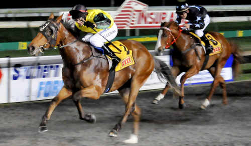 Double Impact and Gary Geran race to victory in the Fitton Insurance Hopeful Plate (1000m) at Clifford Park last September. The gelding will line up in Saturday's $2 million Magic Millions Two-Year-Old Classic (1200m) for trainer Jackie Crompton.