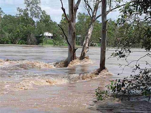 Brisbane river, upstream from Moggill ferry crossing