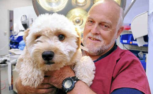 East Bundaberg Veterinary Hospital's Dr David Challen recommends that dog owners get their pets vaccinated against heartworm.