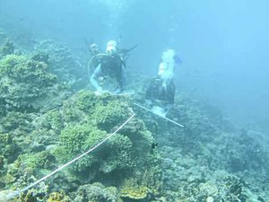 Coral community health gets boost