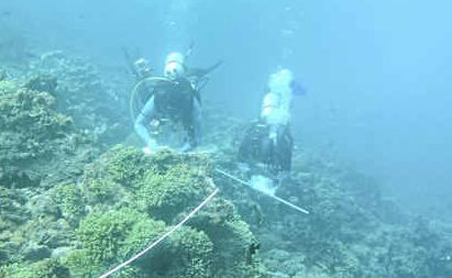 Good signs: Dr Steve Dalton and Dr Andrew Carroll assess bleached coral in the Lord Howe Island Marine Park.