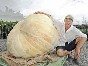 Giant pumpkin weighs in at 400kg