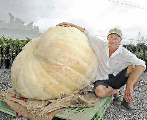 Farmer Dale Oliver, of Knockrow, with his giant pumpkin. It is one of the biggest recorded on the North Coast.