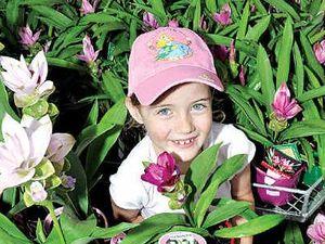 Ginger Flower and Food Festival promises feast for senses