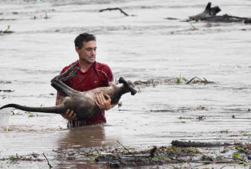 Ray Cole rescued a kangaroo from the swollen Bremer River at the One Mile Bridge and made international headlines.
